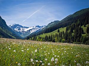 Liechtenstein: A Libertarian Paradise?